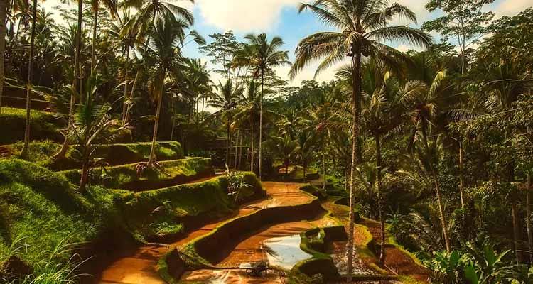 Cose da Fare e Vedere a Bali