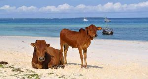 18+ Cose da Vedere e Fare a Zanzibar