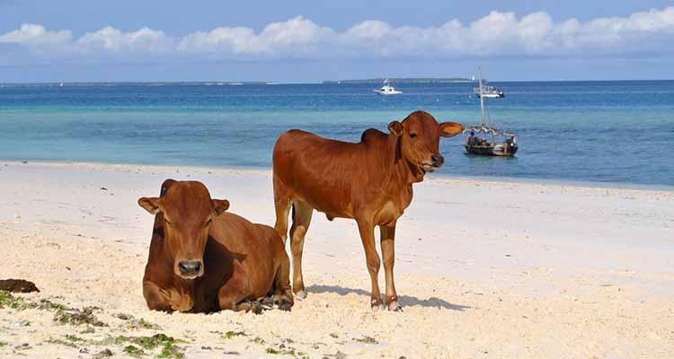 Cose da Vedere e Fare a Zanzibar