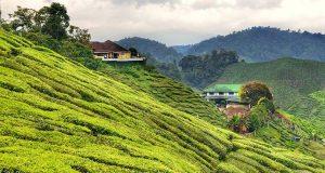 20+ Cose da vedere e fare a Cameron Highlands – Malesia